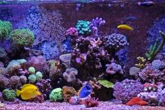 Coral reef aquarium tank