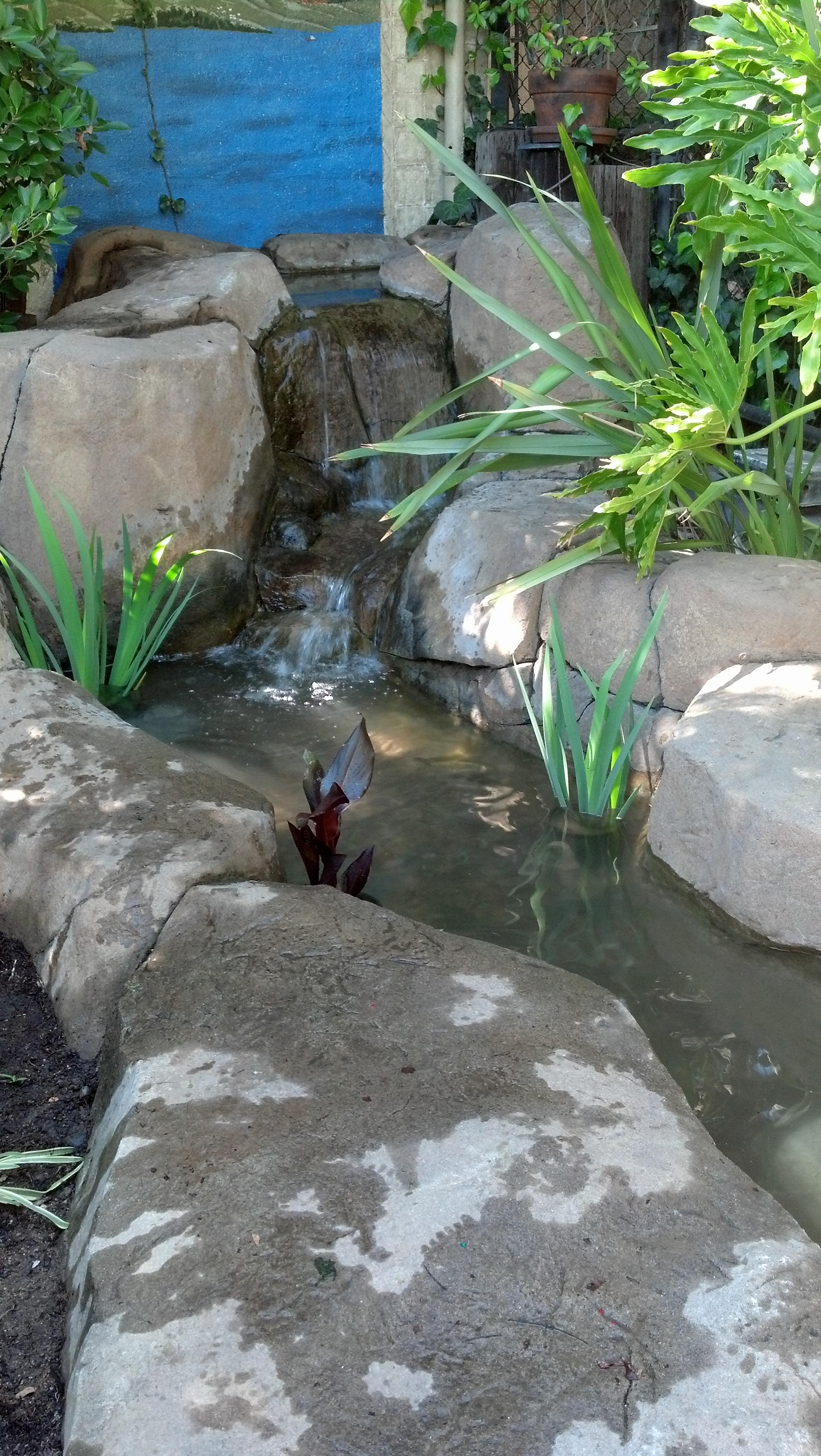 Los feliz pacific pond and aquarium for Pond aquarium